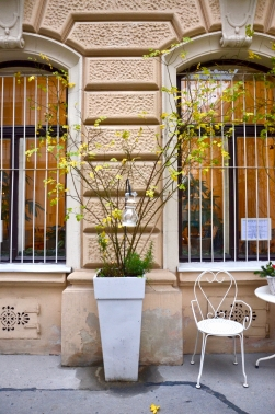 A pretty garden sidewalk scene in Vienna with a large beautiful plant and metal table and chairs