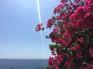 A ray of sunlight touches bright pink flowers in view of the Mediterranean Sea in Manacor, Mallorca