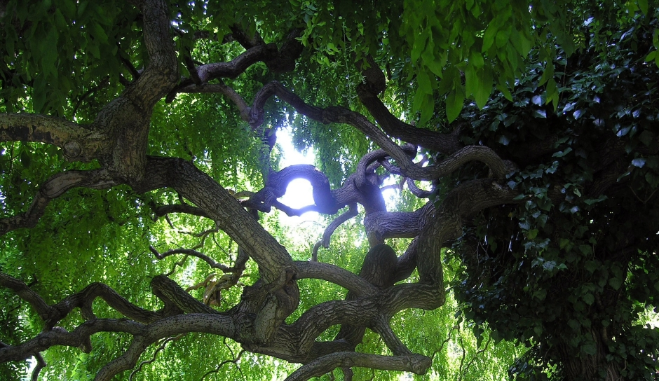Lush green trees provide welcome shade in the Vienna Kagran school gardens.