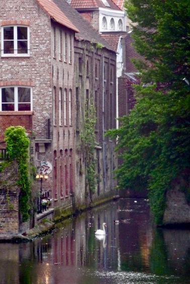Swan on a Belgian canal